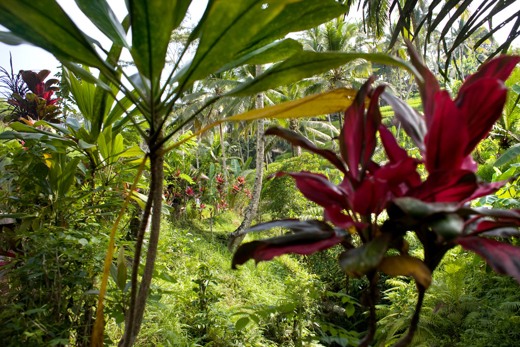 Tegalalang-rice-field-Bali
