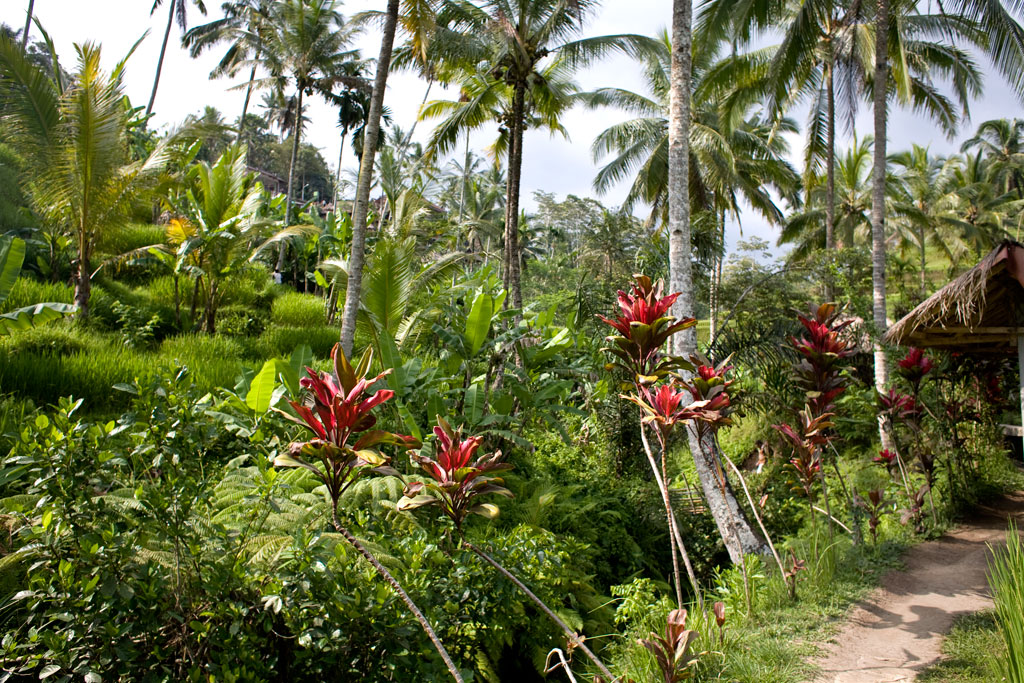 Tegalalang-rice-field-Bali2