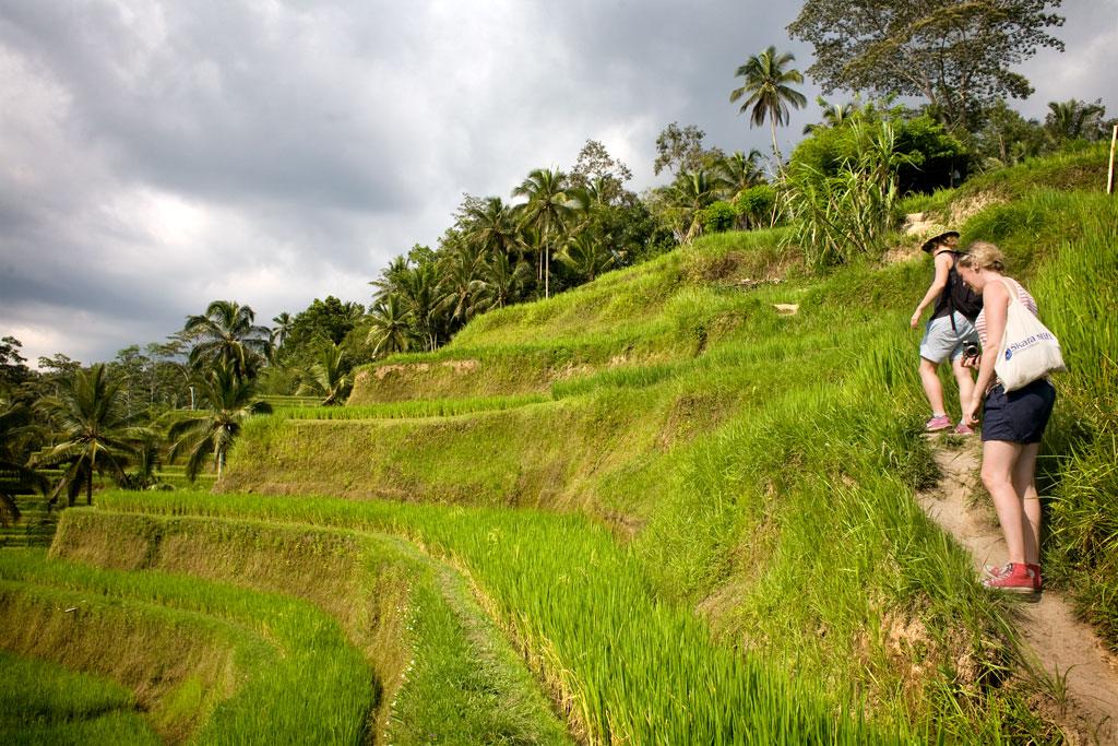 Tegalalang-rice-field-Bali3