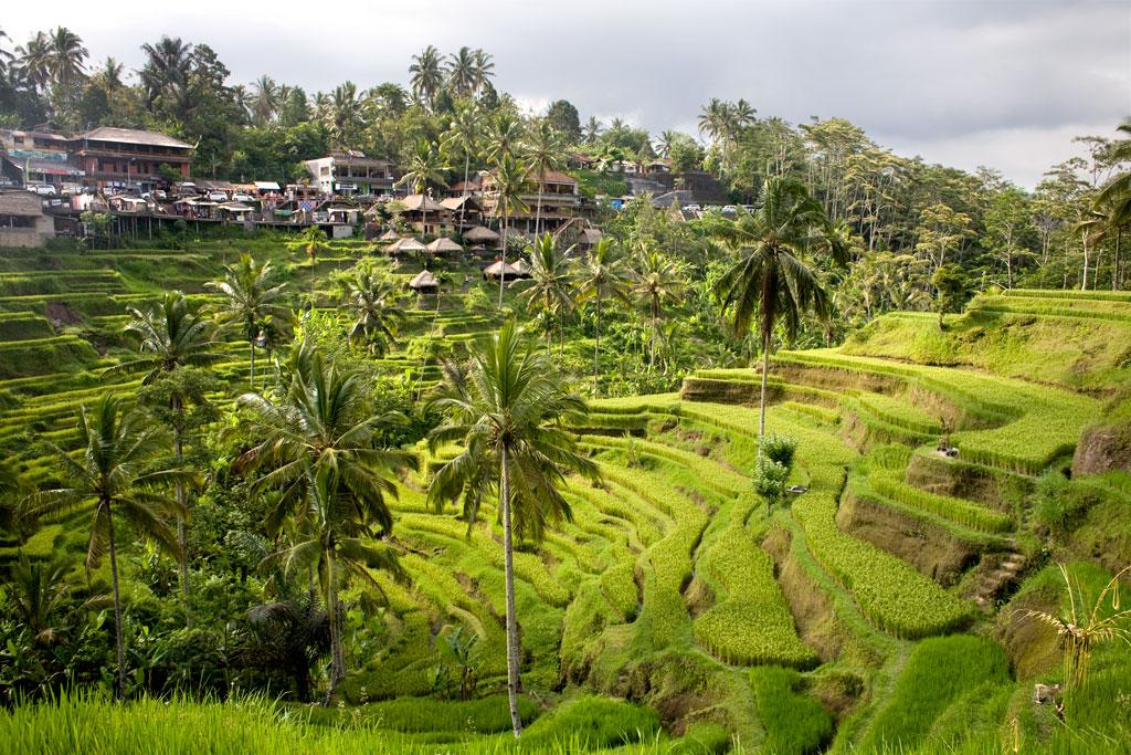 Tegalalang-rice-field-Bali8
