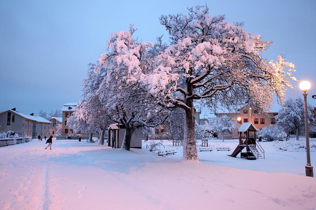 vinter14.webb